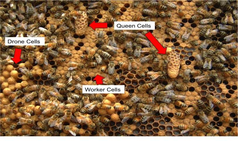 Bee timings - What and Why