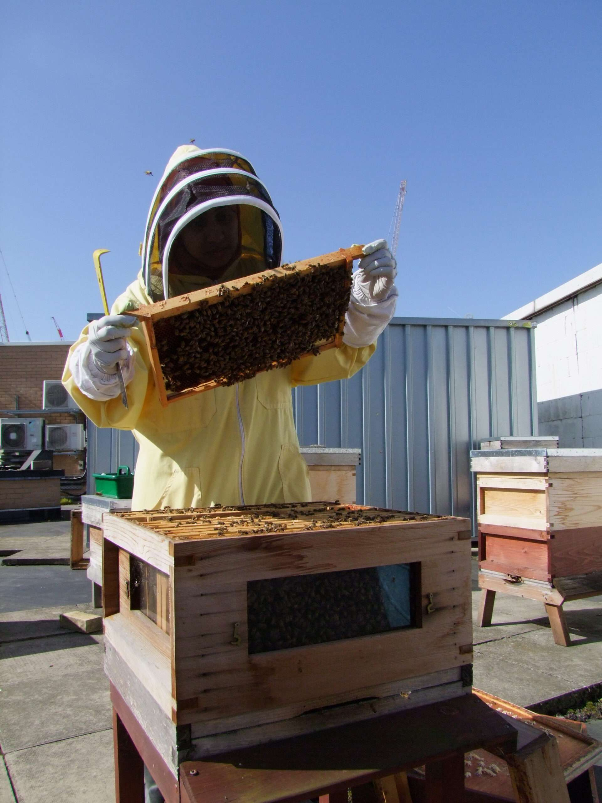 Salma checking bees on roof