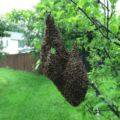 Swarm Management - Understanding the Process