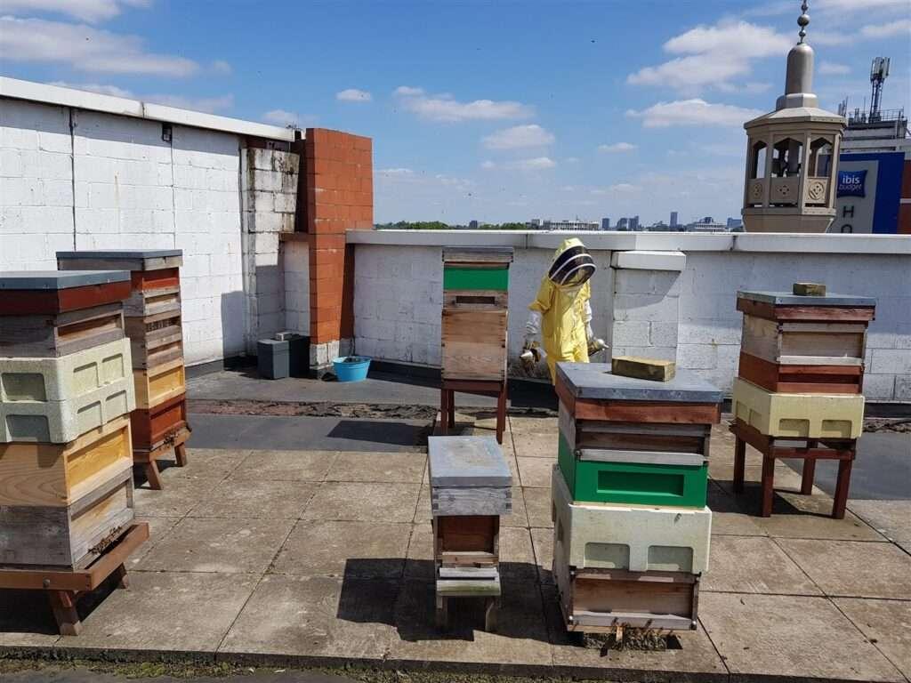Thinking of starting beekeeping