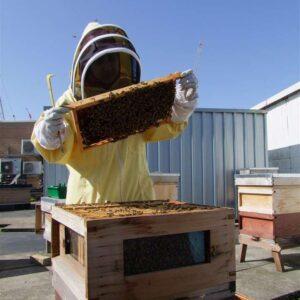Beekeeping Courses