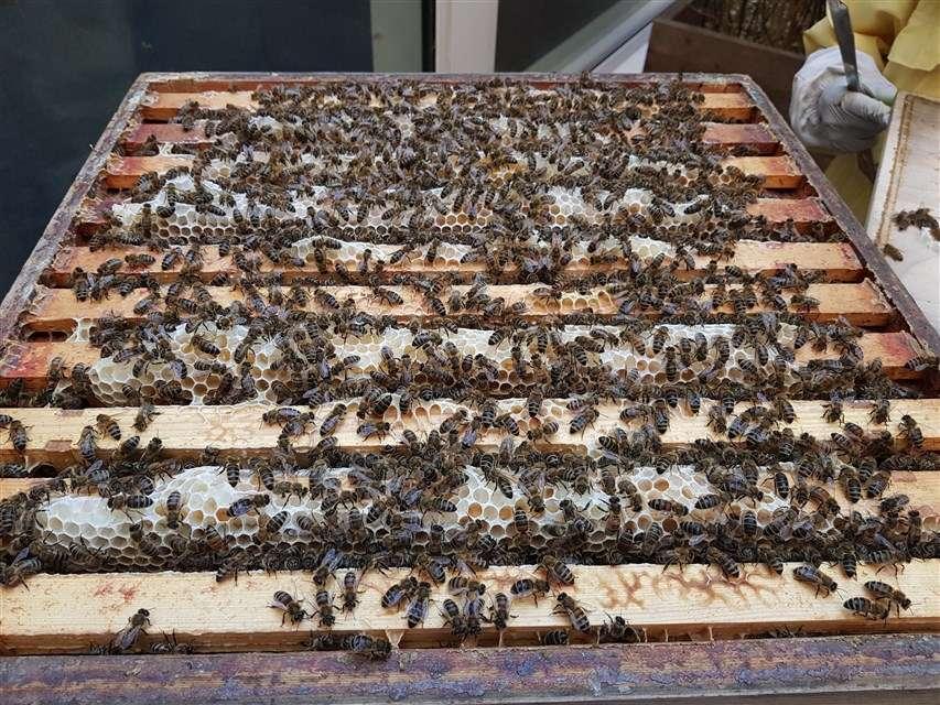 bees in full super