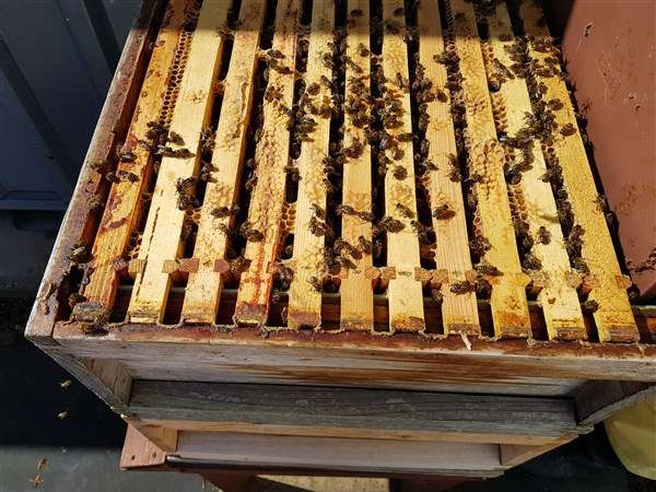 roof bees open