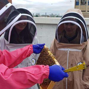 Beekeeping Experiences