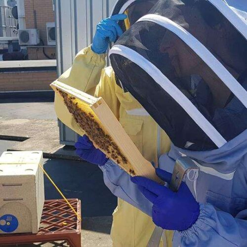 Beekeeping Course frame check