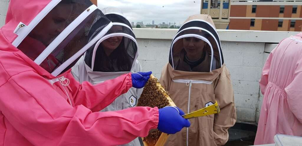 Bushwood Bees Beekeeping course frame check